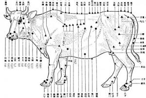 Cow_graphic Picture IAMA